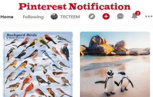 How to Edit your Pinterest Notification Setting